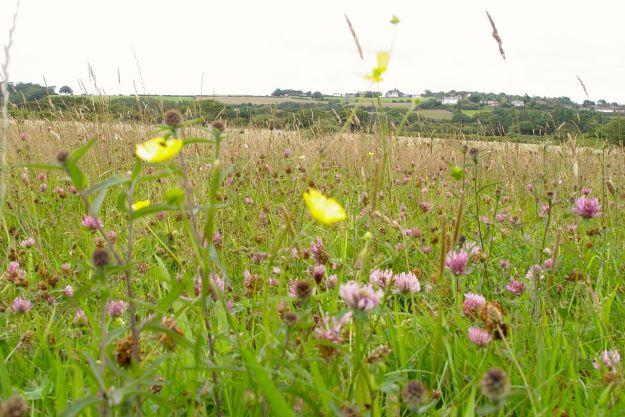 Remembering it as a meadow of wildflowers in August.