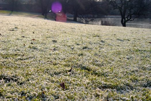 Into Greenbank Park and a field of frost.