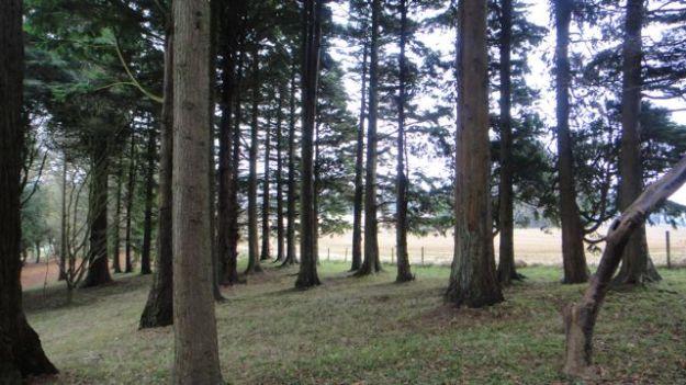 Woodland walks in the garden.