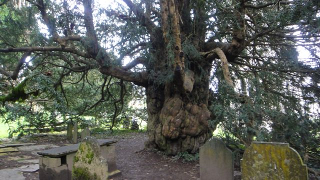 Behind the church is the oldest living resident of the garden, a yew tree believed to be 1,500 to 2,000 years old.