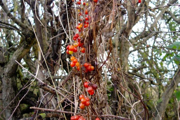 Hedgerows almost bare now, just some berries left.