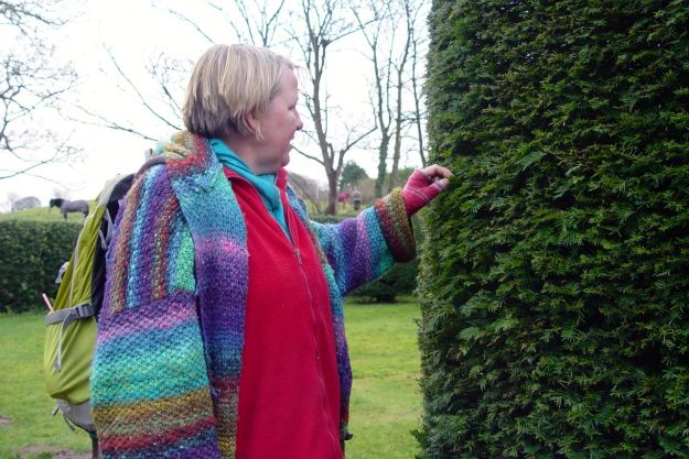 Round in Thurstaston church-yard today, Sarah looks at the yew.
