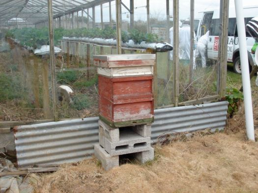 This is the hive we have moved into place. The opening of the hive goes into the glasshouse.