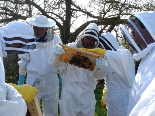 Close inspection of the frames, revealing lots of information about the state of the hive and the bees.
