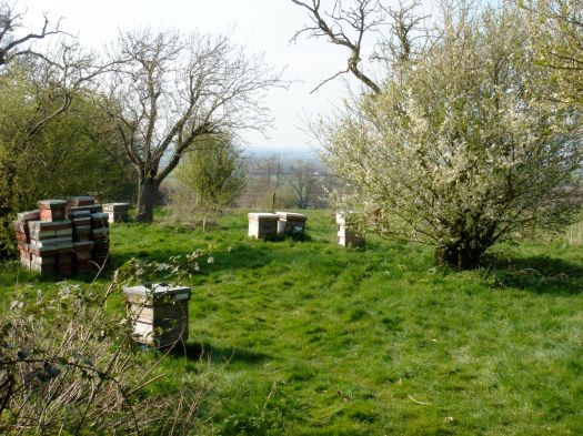 Bee hives at Hartpury college.