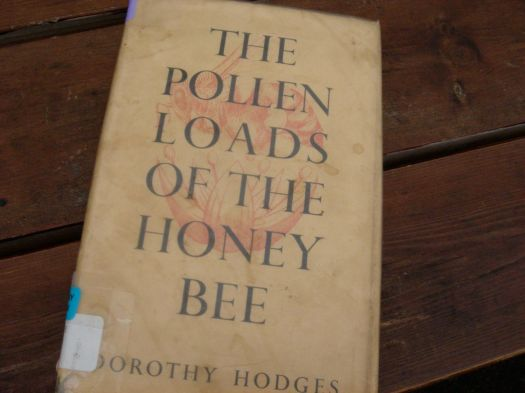 The Pollen Loads of the Honey Bee, by Dorothy Hodges.
