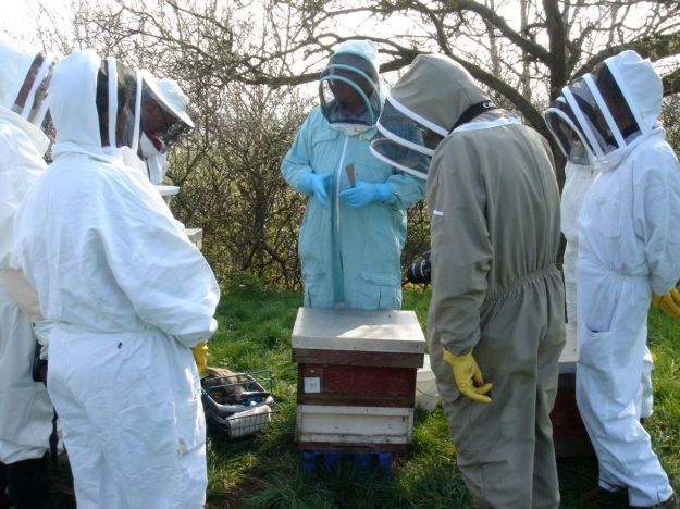 We learn how to approach opening a hive.