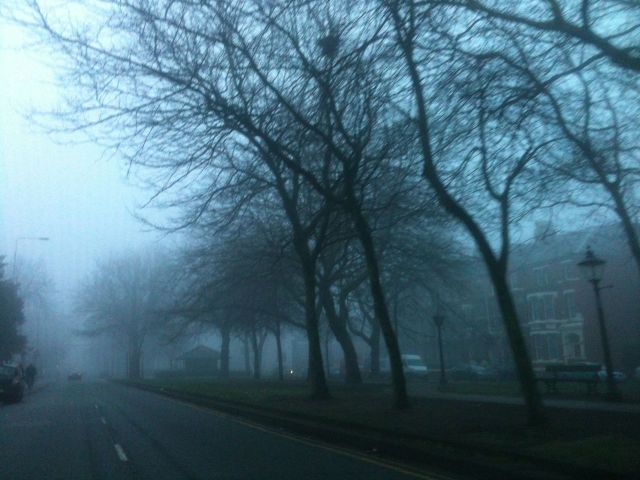 Winter trees on the foggy boulevard.