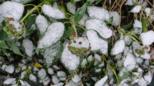 Snow held gently.