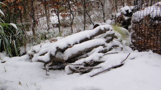 the woodpile that was the tired old apple tree.