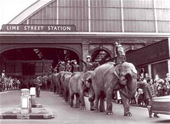 Elephants leaving Lime Street Station, 1959. Bound for Billy Smart's Circus.