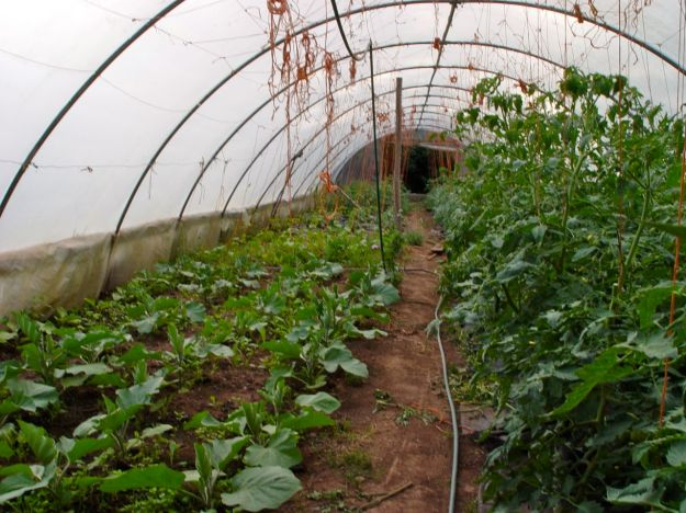 Permaculture at Primrose Farm.