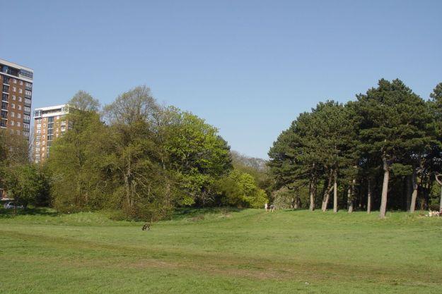 Across Sefton Park.