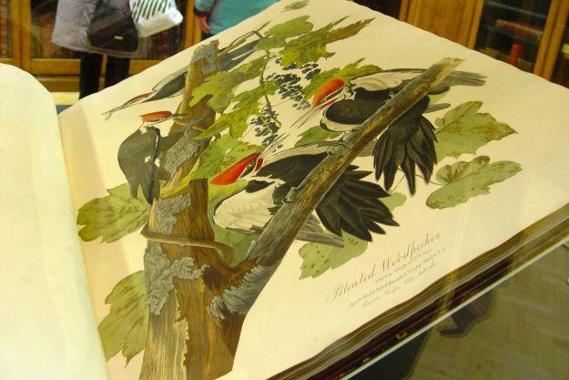 And John James Audubon.