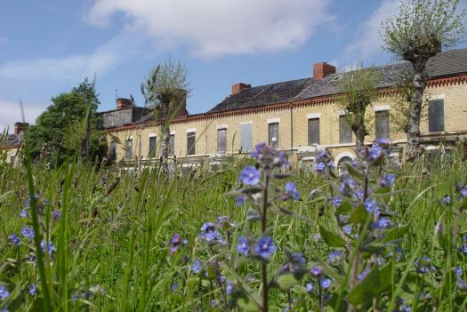 The field of wildflowers on the demolished side of Ducie Street.
