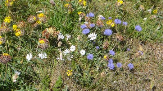 wildflower heaven