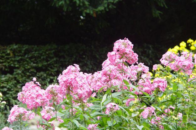 In end of summer splendour.