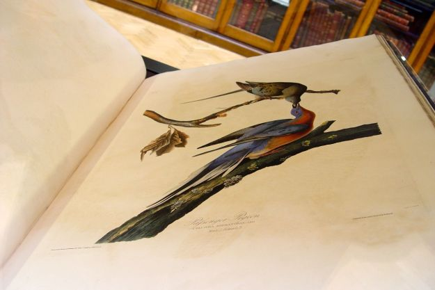 Going for our regular look at the Audubon book.