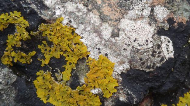 Like this algae on the rocks.