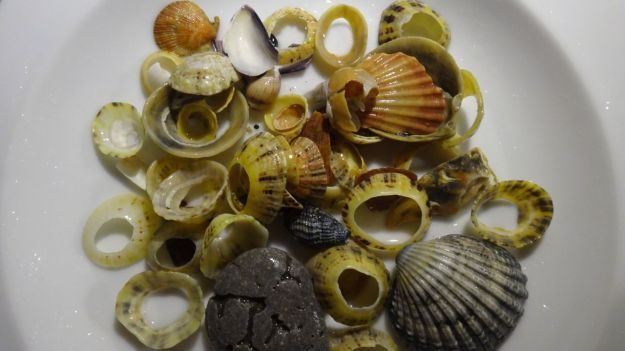 Then home with Sarah's shells.