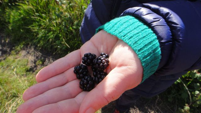 And enjoyed the blackberries growing all around it.