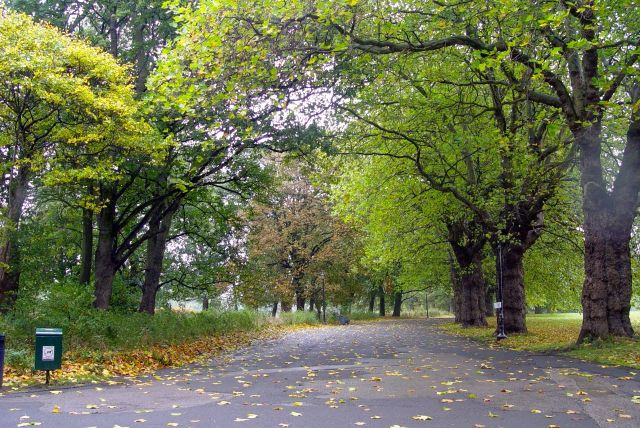 Then home through Sefton Park in rainy autumn.