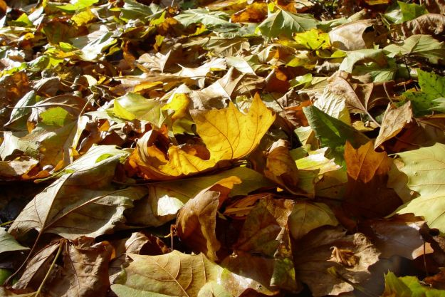 When the leaves are on the ground, the days get shorter. Always happens.