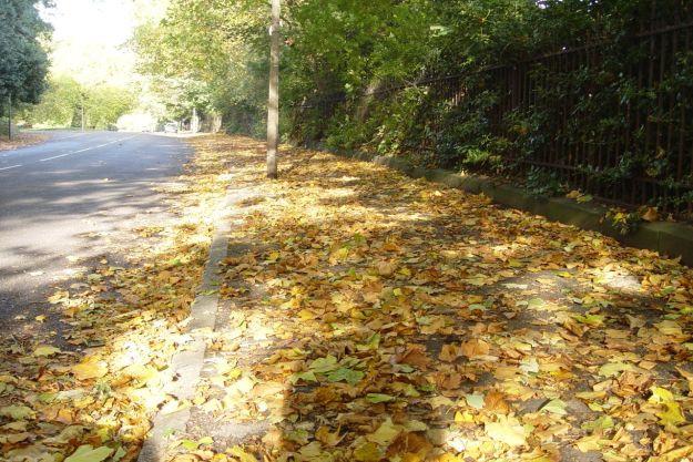 The golden autumn pavement of Greenbank Drive.