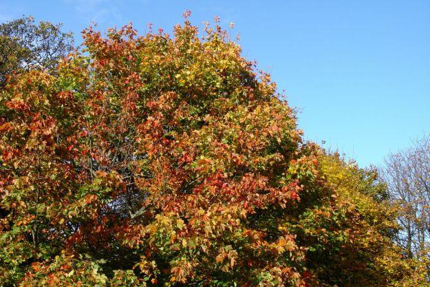 Autumn Song06