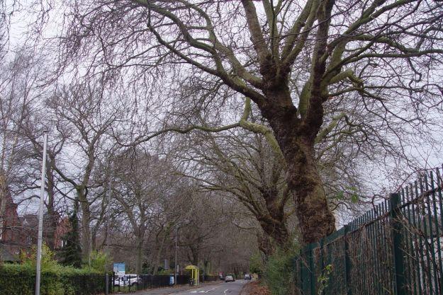 Walking under the winter trees on Greenbank Lane.
