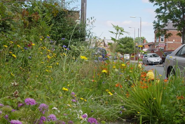 But the gardeners of here 'That Bloomin' Green Triangle' have just won the Spirit of Merseyside Environmental Impact Award for 2013. So there.