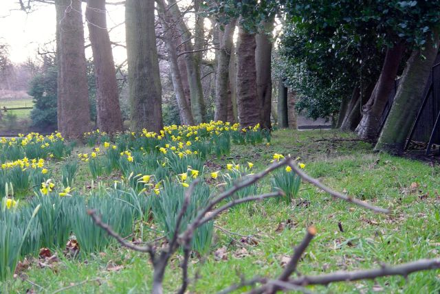 Reaching the park, these daffodils have been out for a few weeks now.