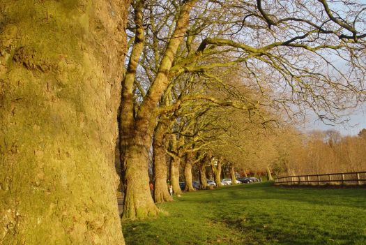 Along the avenue of trees in the perfect light.
