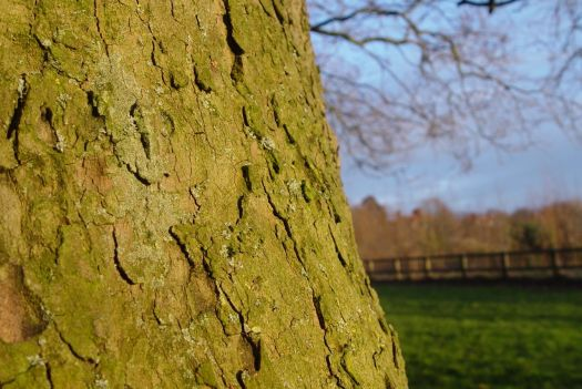 Looking closely at the detail of the green bark.
