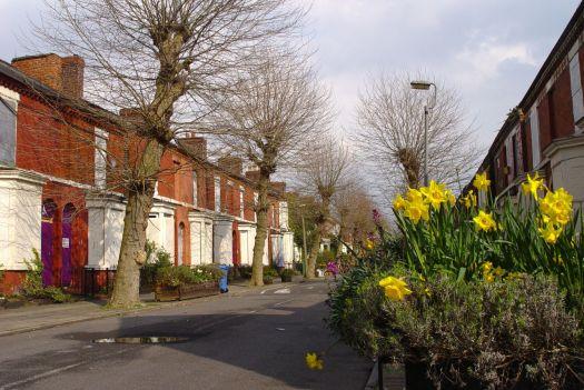Springtime on Cairns Street.