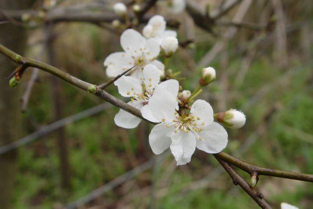 Glistening blossom.