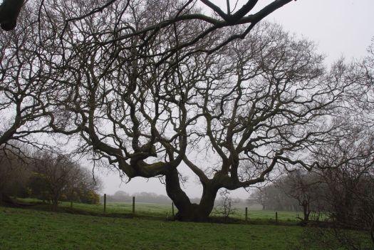 The lovely still bare tree.