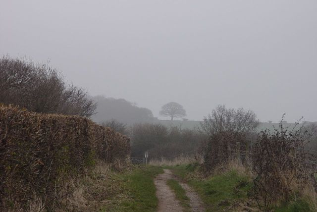 Looking back from Heswall Fields. The perfect tree, almost lost in the mist.