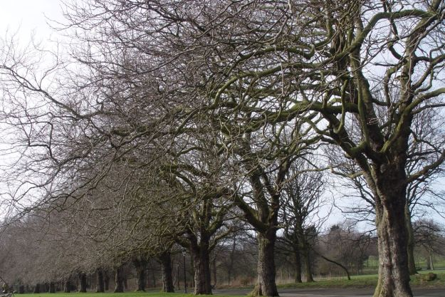 Even in the avenue of winter trees in Sefton Park.