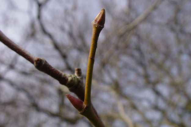 There are buds on every branch.