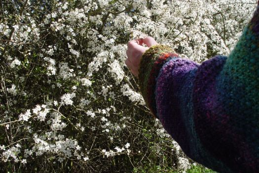 Wildflowers14