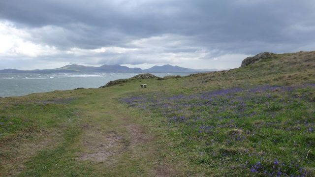 On Ynys Llanddwyn, off the main island, Bluebells cover the hills.