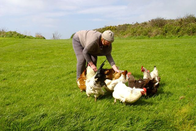 Sarah particularly enjoyed feeding the hens with our leftovers.