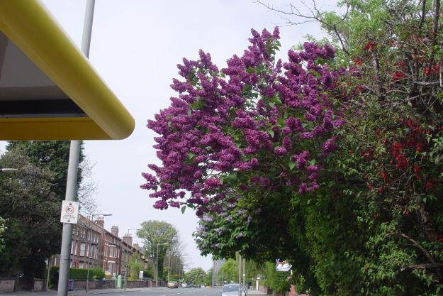 And Croxteth Road.