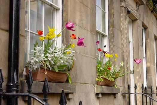 Window box displays further along Percy Street. A well loved place.
