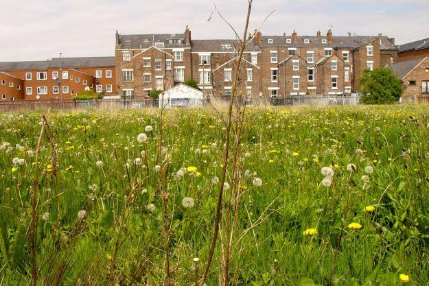 Splendid field of wildflowers between Selborne Street and Upper Parly.