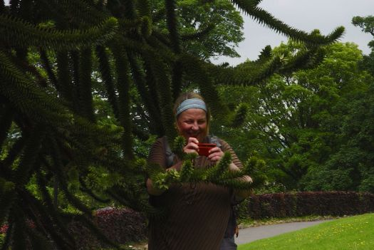 She photographs Monkey Puzzle trees.