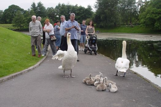 Proudly born on the path around the lake.