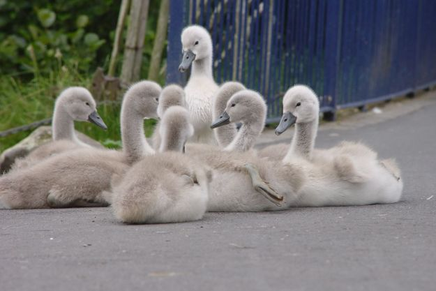 One more Spring, Eight babies.