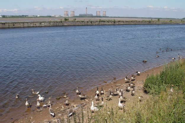 Down on the Promenade there is the Manchester Ship Canal before the River Mersey. And a whole township of assorted geese.
